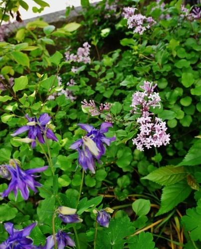 花咲く5月♪_e0167795_15461904.jpg