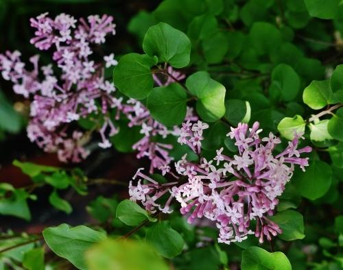 花咲く5月♪_e0167795_15465153.jpg