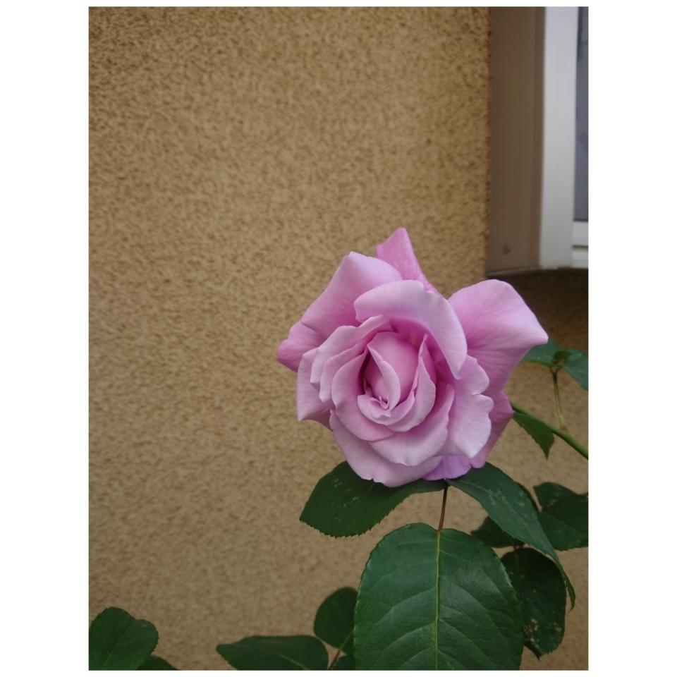 春のお庭_a0146536_21085078.jpg