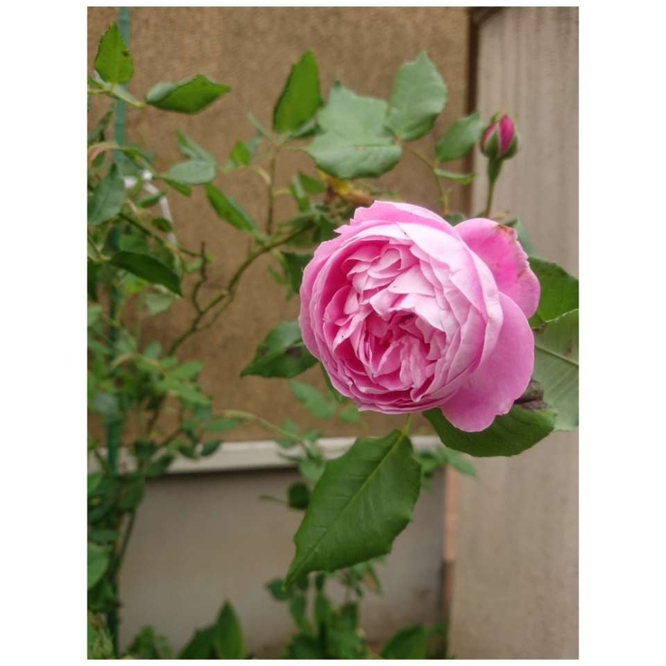 春のお庭_a0146536_21094795.jpg