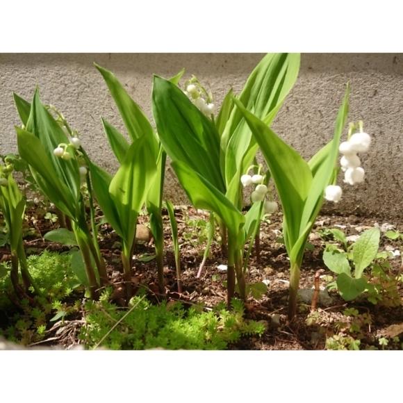 春のお庭_a0146536_21164704.jpg