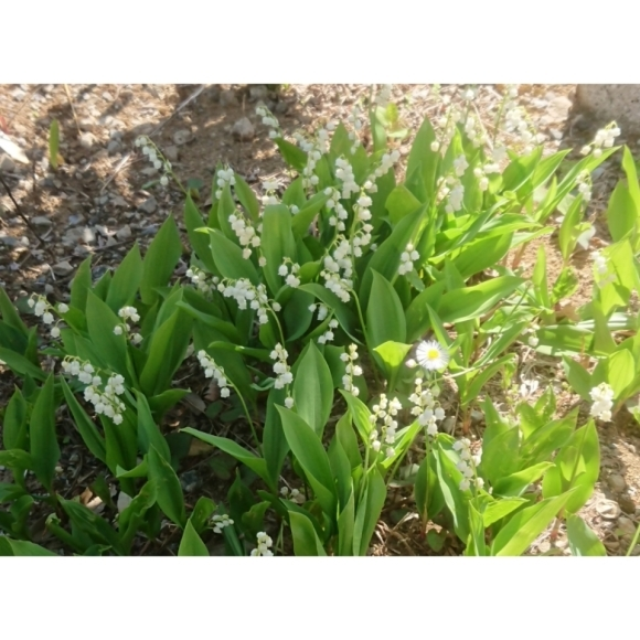 春のお庭_a0146536_21182788.jpg