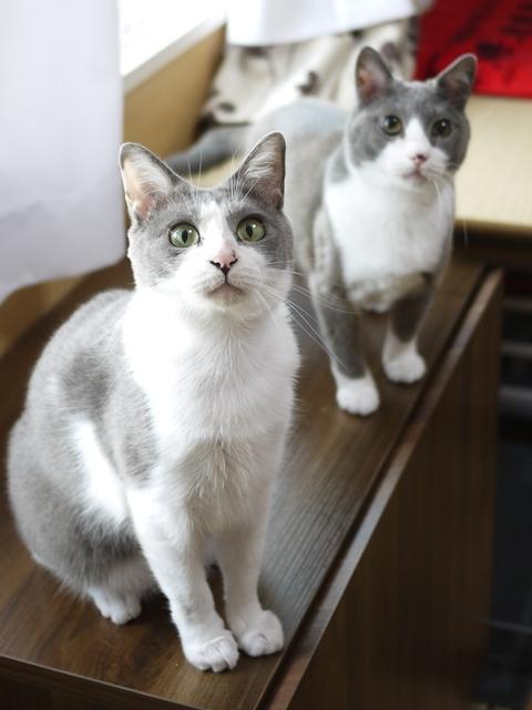 猫のお留守番 赤福くん伊賀丸くん編。_a0143140_22061458.jpg