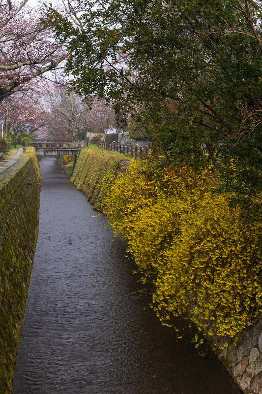 2021桜咲く京都 雨中のしだれ桜(大豊神社)_f0155048_23265624.jpg