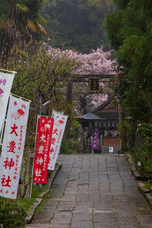 2021桜咲く京都 雨中のしだれ桜(大豊神社)_f0155048_23280925.jpg