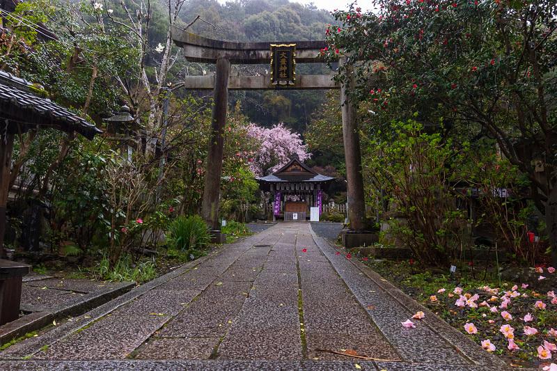 2021桜咲く京都 雨中のしだれ桜(大豊神社)_f0155048_23293184.jpg