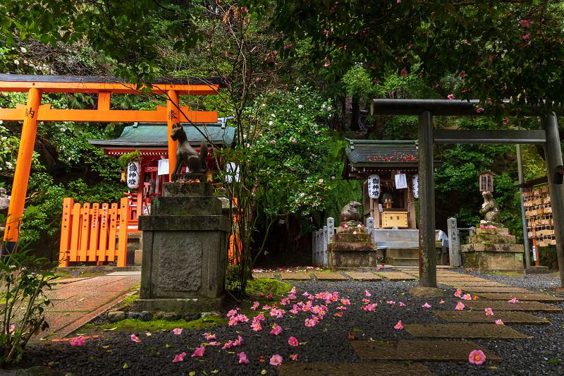 2021桜咲く京都 雨中のしだれ桜(大豊神社)_f0155048_23340230.jpg