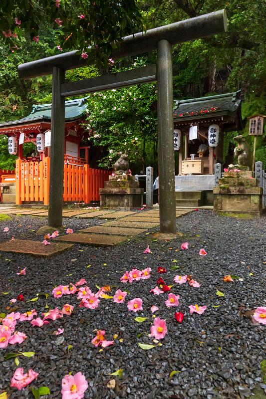2021桜咲く京都 雨中のしだれ桜(大豊神社)_f0155048_23342141.jpg