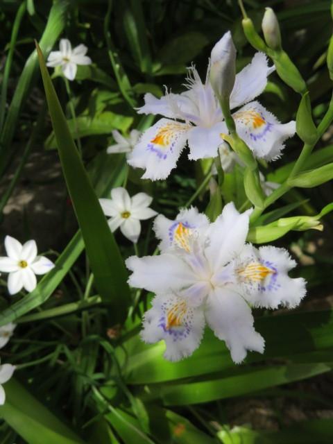 春の庭先に咲く花々_f0329849_21154670.jpg