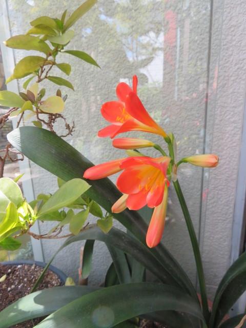 春の庭先に咲く花々_f0329849_21163164.jpg