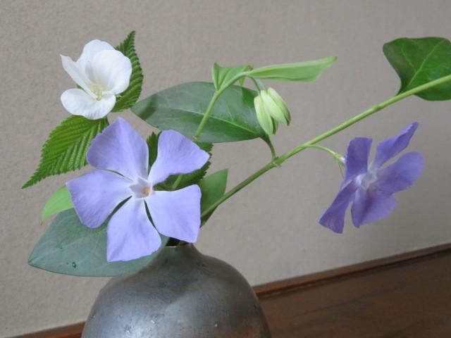 春の庭先に咲く花々_f0329849_21170102.jpg