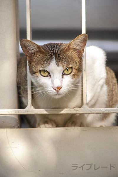 ご近所猫 2021.05.01_f0112152_22280074.jpg