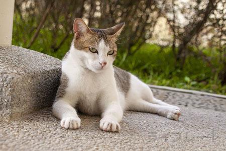 ご近所猫 2021.05.01_f0112152_22280914.jpg