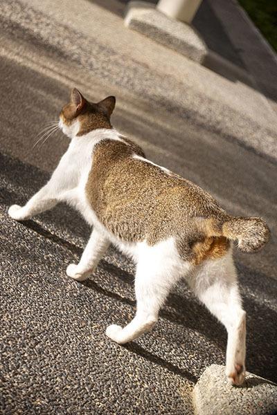 ご近所猫 2021.05.01_f0112152_22282362.jpg