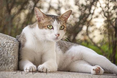 ご近所猫 2021.05.01_f0112152_22284023.jpg