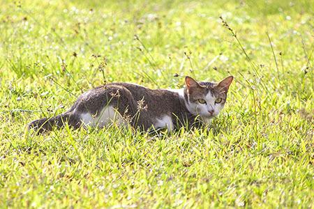 ご近所猫 2021.05.01_f0112152_22290649.jpg