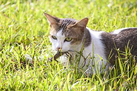 ご近所猫 2021.05.01_f0112152_22291450.jpg