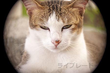 ご近所猫 2021.05.01_f0112152_22292031.jpg