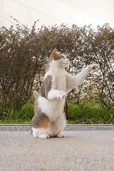 ご近所猫 2021.05.01_f0112152_22305562.jpg