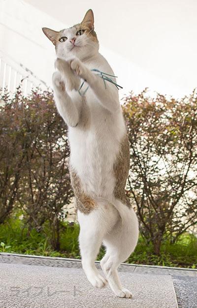 ご近所猫 2021.05.01_f0112152_22310584.jpg