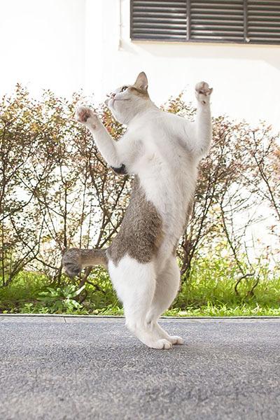 ご近所猫 2021.05.01_f0112152_22312587.jpg