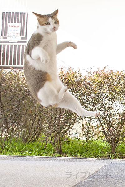 ご近所猫 2021.05.01_f0112152_22313544.jpg