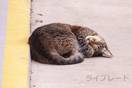 ご近所猫 2021.05.01_f0112152_22334485.jpg