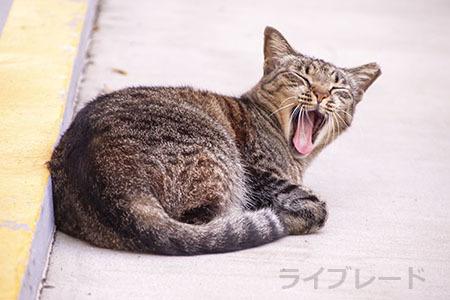 ご近所猫 2021.05.01_f0112152_22340134.jpg