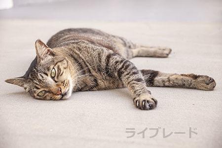 ご近所猫 2021.05.01_f0112152_22342256.jpg