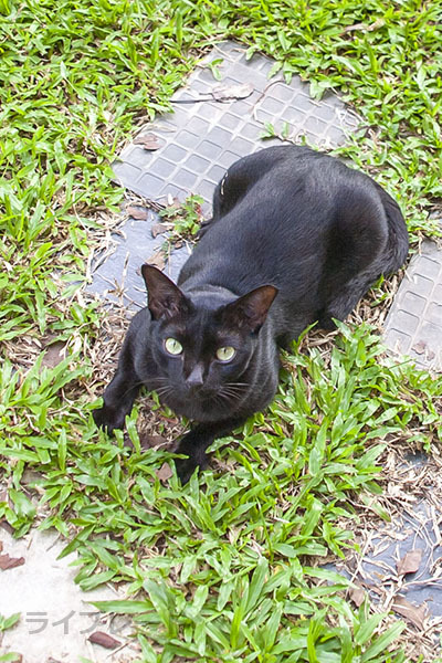 ご近所猫 2021.05.01_f0112152_22343081.jpg