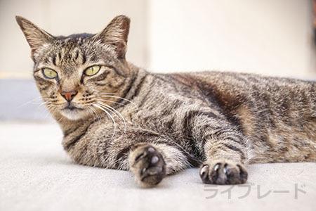 ご近所猫 2021.05.01_f0112152_22344449.jpg