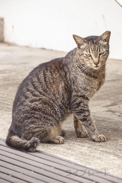 ご近所猫 2021.05.01_f0112152_22345575.jpg