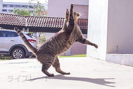 ご近所猫 2021.05.01_f0112152_22363179.jpg