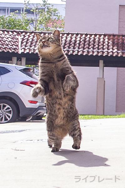 ご近所猫 2021.05.01_f0112152_22372678.jpg