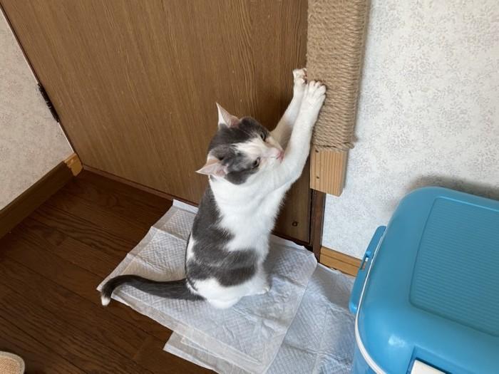 コタロウ トイレ以外でオシッコをする。_e0039975_23570738.jpg