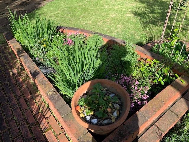 春の庭_b0367284_16173219.jpg