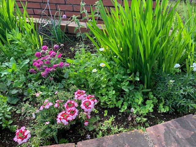 春の庭_b0367284_16173549.jpg
