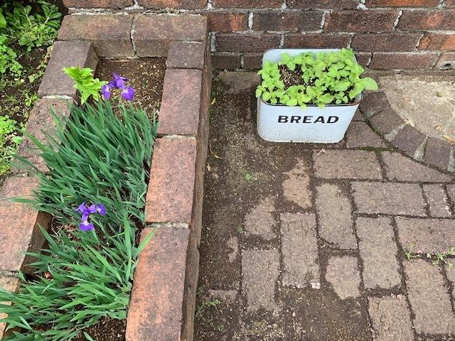 春の庭_b0367284_16174691.jpg