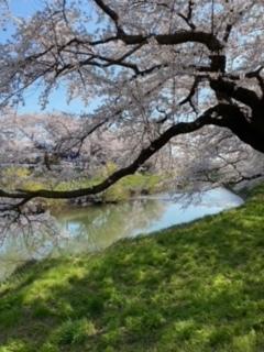 桜♪さくら♪SAKURA♪2021_a0265401_11304475.jpeg