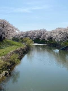 桜♪さくら♪SAKURA♪2021_a0265401_11305407.jpeg