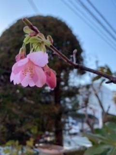 桜♪さくら♪SAKURA♪2021_a0265401_11310292.jpg