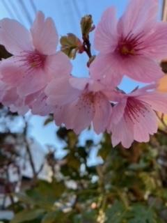 桜♪さくら♪SAKURA♪2021_a0265401_11310534.jpeg