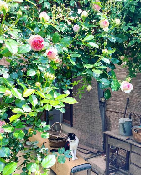 5月はじまりの中庭より。〜バラが咲き始めました。〜_d0077603_11513997.jpg