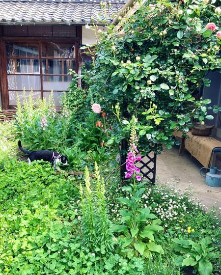5月はじまりの中庭より。〜バラが咲き始めました。〜_d0077603_11515296.jpg