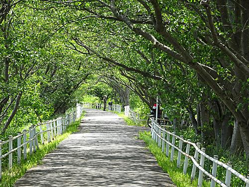 花見川散歩_c0137404_17161290.jpg