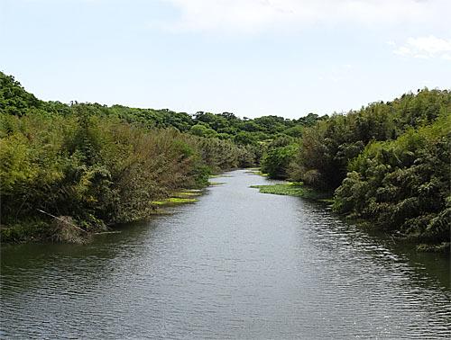 花見川散歩_c0137404_17165593.jpg