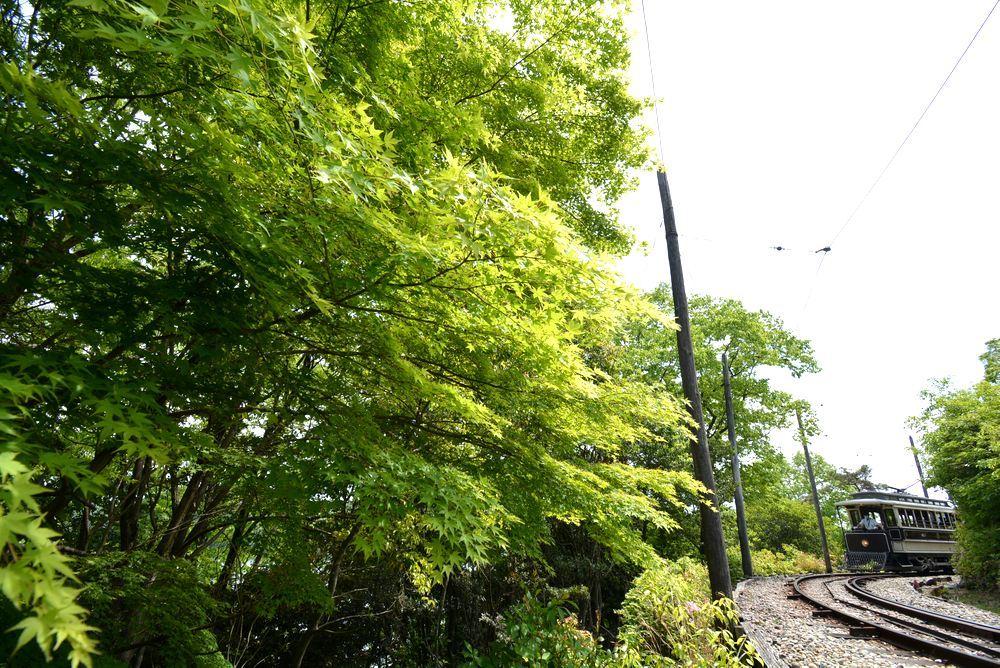 新緑の中の京都市電2 品川燈台電停_e0373930_23251958.jpg