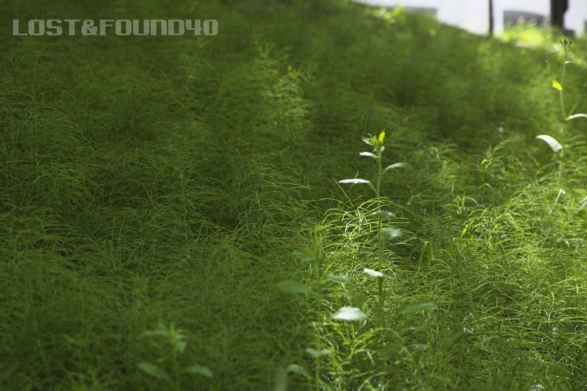 新緑を探して_a0132635_16293539.jpg