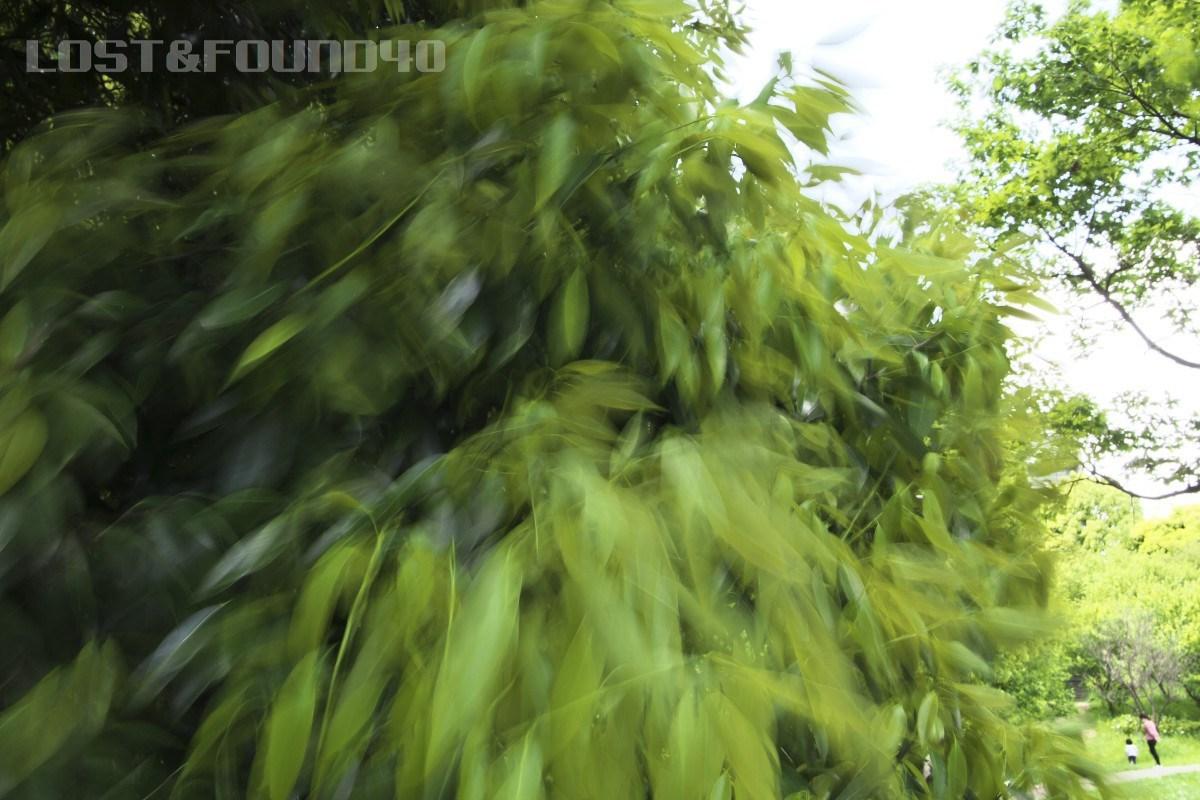 新緑を探して_a0132635_16294726.jpg