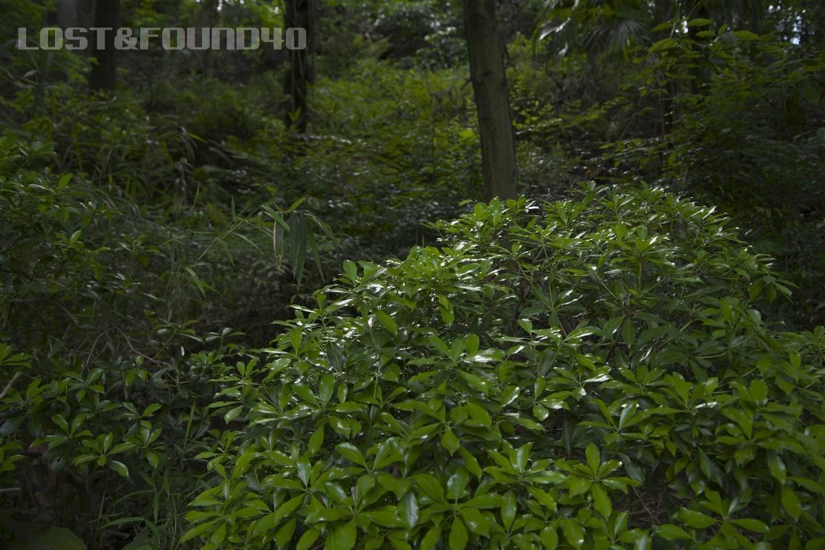 新緑を探して_a0132635_16300472.jpg